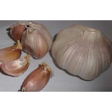 Organic Purple Skins Of Garlic