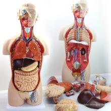 TORSO02 (12013) Medical Dual-Sex 85cm 27-partes Torso Modelo con Espalda Abierta, Modelo de Anatomía Humana para Ciencias Médicas