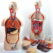 TORSO02 (12013) медицинской двойного пола 85см 27-части туловища модели с открытой спиной, Анатомия человека модель медицинских наук
