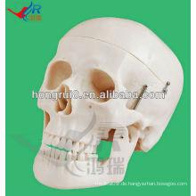 Lebensgröße Menschliches Modell für Bildung Skelett Kopf