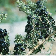Medlar 100% Bayas de Goji orgánicas negras