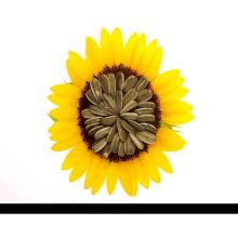2016New Crop Hybrid Lange Art Sonnenblumenkerne