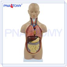 PNT-0320 cuerpo humano médico torso modelo 50 CM 12 piezas