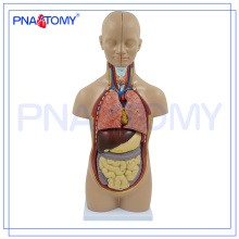 ПНТ-0320 медицинская модель человеческого тела 50 см 12 деталей