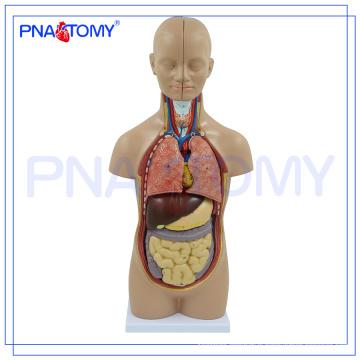PNT-0320 medical human body torso model 50CM 12 Parts