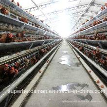 Automatische Hühnerkäfig Farm für Schichten mit SGS Cetification