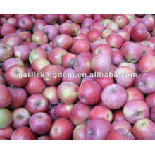 unbagged Qinguan Apple from origin