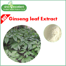 Panax Ginseng Stam & Leaf Extract