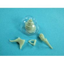 Human Ear Bone Model Set