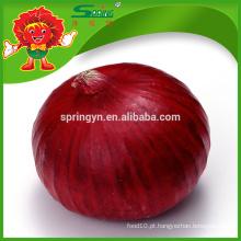 Exportação de cebolas frescas para Dubai