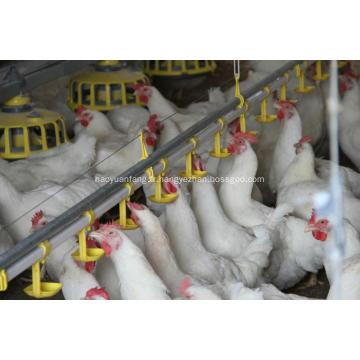 Ligne d'alimentation automatique pour poulets de chair