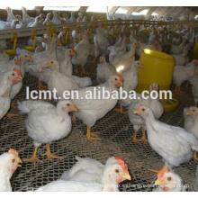 equipos de pollos de engorde de aves de corral para la casa de pollo