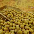 Großhandelsbohnen getrocknete Feldbohne mit nettem Preis