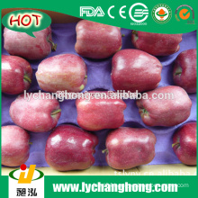 2015 New Crop China Red Delicious Apples For India Market
