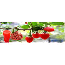 Ningxia Wholesale Dried bulk Wild Goji Berry