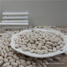 Preis von Marine White Kidney Bean Spanisch Weiß
