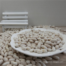 Price of Navy White Kidney Bean Spanish White