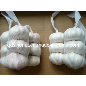 New Crop Jinxiang Knoblauch (3P)