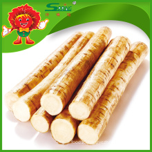 Top Quality Burdock Root Fresh Burdock Supplier