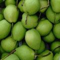 Cor Verde da Nova Colheita de Shandong Pear
