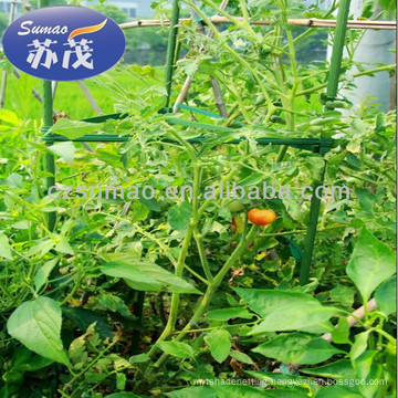 tomatoes stents,plant stent