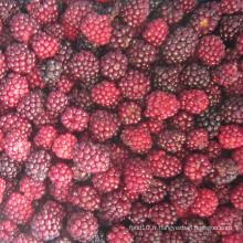 Zl-1046 Anic Blackberry Zl-1046 8