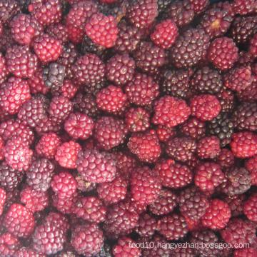 Zl-1046 Anic Blackberry Zl-1046 9