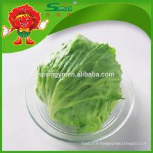 [Vente en gros] Round Iceberg Lettuce romaine lettuce