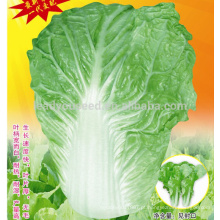 CC04 SJ No.5 semente de repolho chinês maduro, sementes de repolho chinês híbrido