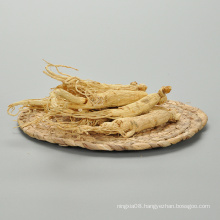 China Professional Manufacturer Ginseng Dry Extract Ginseng Root Extract