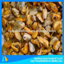 Meeresfrüchte gefrorenes Miesmuschelfleisch in halber Schale