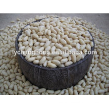 High quality and super low price blanched = peanuts peeled hot sale
