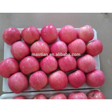 Fresh apple fruit for south east asia countries