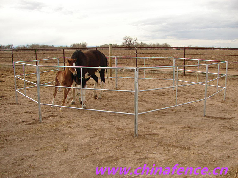 High Quality Horse Fence