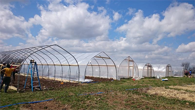 Long Life Prefabricated Simple Structure Cheap Tunnel Greenhouse