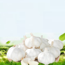buy chinese wholesale garlic ajo/alho/ail export