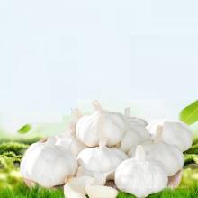 comprar alho por atacado chinês ajo / alho / ail exportação