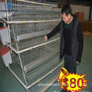 layer chicken cages with Auto water system
