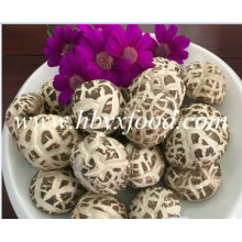 3-4cm Dehydrated Dried White Flower Shiitake Mushroom