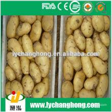 2014 best quality sweet seed potatos (80-150g, 100-200g, 200g up)