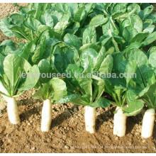 R01 Dabaisha sementes de rabanete branco maturidade precoce, sementes de hortaliças chinesas