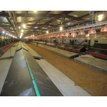 Steel Structure Automatic Chicken Farm with Poultry Equipments