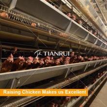 Tianrui Poultry Farm Chicken Egg Cages