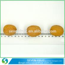 Exportation en vrac à l'usine chinoise à base de noix