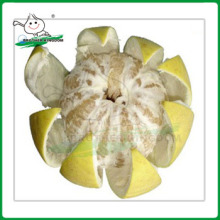 Neue Ernte frischen Honig Pomelo aus Bruder Königreich