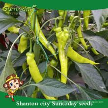 Suntoday азиатских овощей F1 органические желтый kamyon паприкой годовых горячего перца Чили семена(21027)