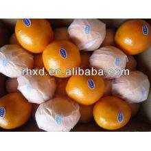 сладкий список пупка оранжевый желтый плод