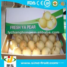 Frische Birne aus China