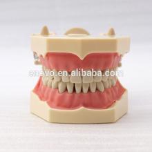32 piezas de dientes extraíbles SF tipo modelo de estudio dental para la educación escolar 13009