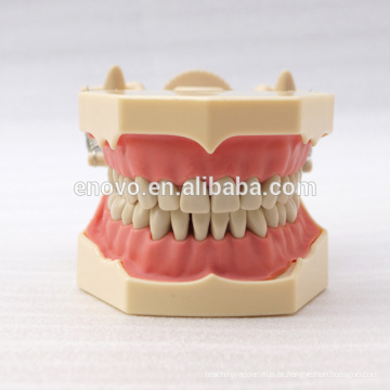 32 pcs Dentes Removíveis SF Tipo Modelo de Estudo Dental para a Educação Escolar 13009